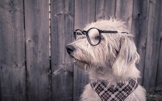 Wallpaper Funny animals, dog, glasses