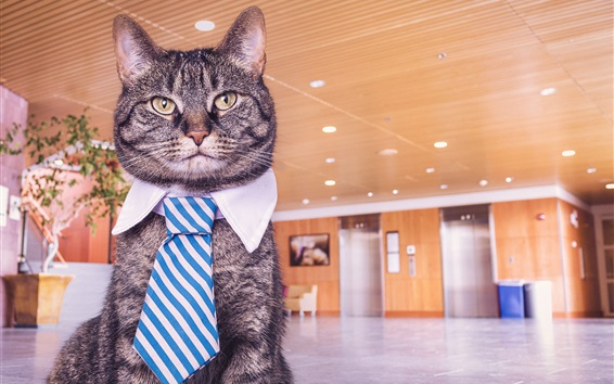 Wallpaper Funny cat, tie