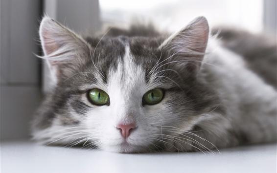 Papéis de Parede Visão frontal de gatinho peludo, olhos verdes