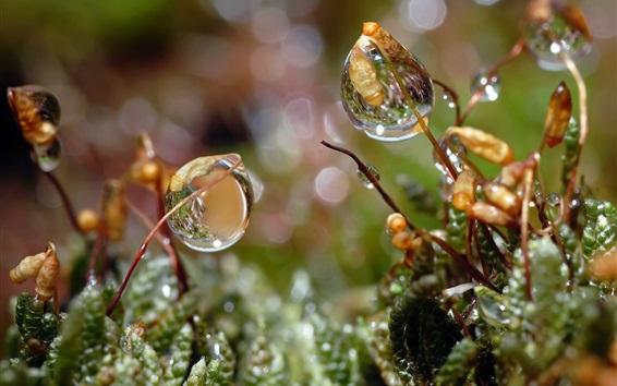 Wallpaper Grass, plants, after rain, water drops