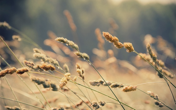 Wallpaper Grass, water drops, blurry background