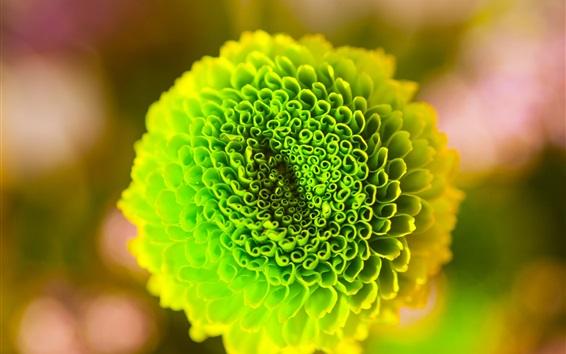 Обои Зеленая цветочная макро фотография