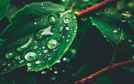 Papéis de Parede Folhas verdes, orvalho