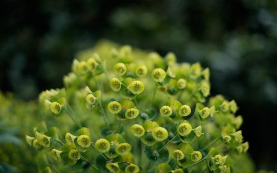 Wallpaper Green littles flowers, plants close-up