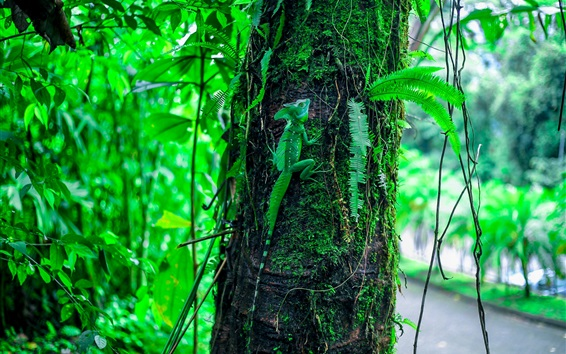 Wallpaper Green lizard climbing tree, leaves