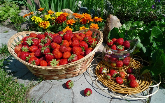Wallpaper Harvest, delicious strawberry