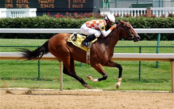 Wallpaper Horse riding race