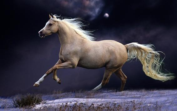 Papéis de Parede Corrida de cavalo, salto, velocidade
