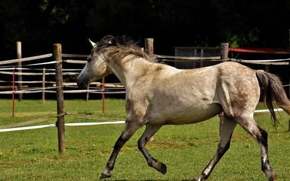 Wallpaper Horse walk, fence