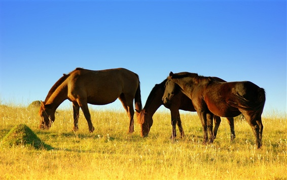 Wallpaper Horses walk to eat grass
