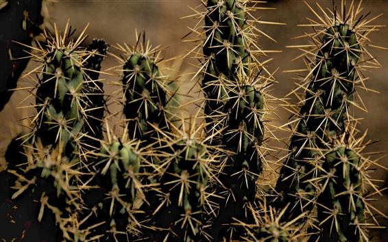 Wallpaper Houseplant, cactus, thorns