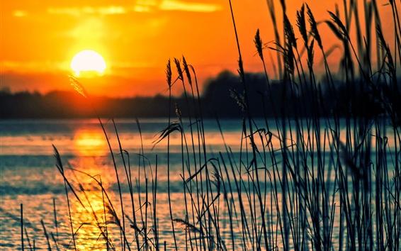 Обои Озеро, тростник, закат