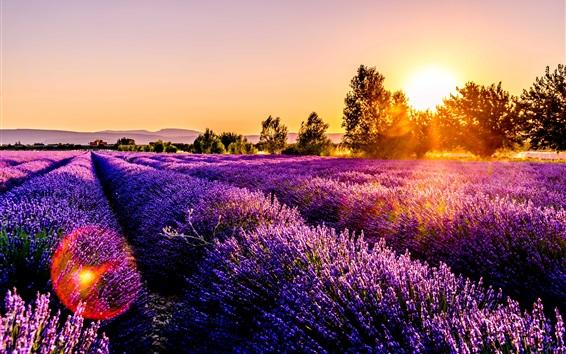 Wallpaper Lavender field, flowers, sunset, France