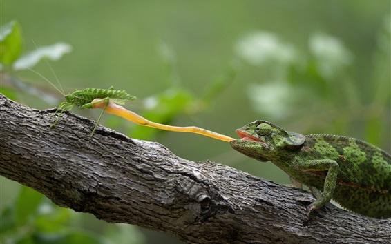 Papéis de Parede Insteto de caça a lagarto
