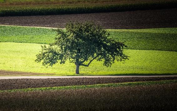 Wallpaper Lonely tree, road, field