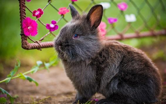 Fond d'écran Lovely lapin gris et animal à fourrure