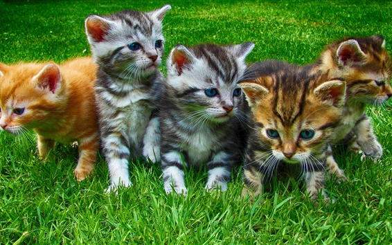 Wallpaper Lovely kittens, grass