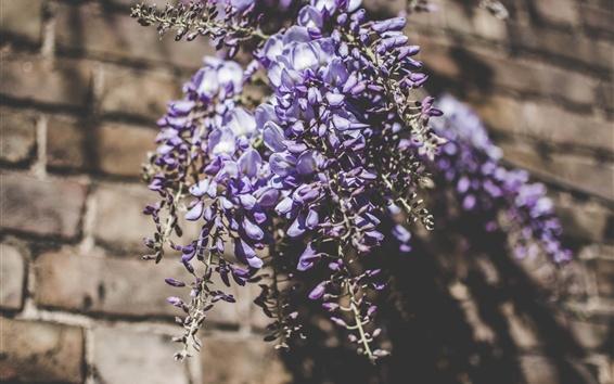 배경 화면 루팡 꽃다발, 푸른 꽃