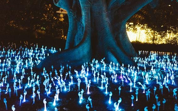 Обои Грибы светятся, неон, дерево, ночь