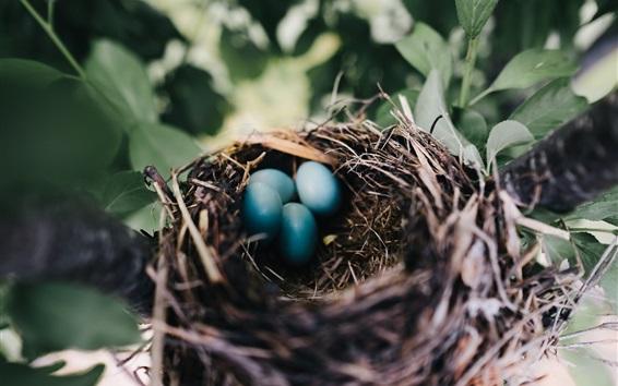 Wallpaper Nest, eggs