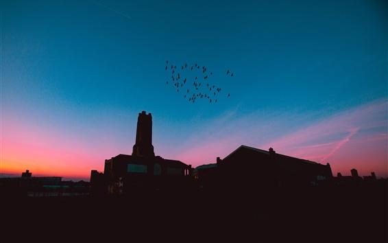 Wallpaper Night, flock birds flying, city