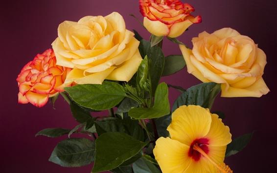 Fondos de pantalla Rosas y hibiscos de color naranja