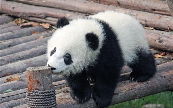 Обои Ребенок панды
