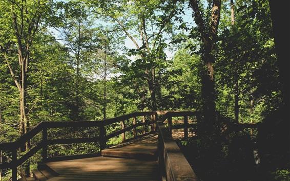 Fond d'écran Parc, arbres, pont en bois