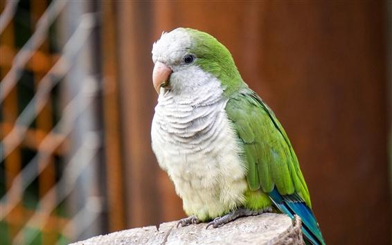 Papéis de Parede Parrot, penas brancas verdes