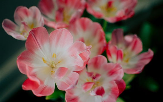 Wallpaper Pink petals flowers close-up, spring