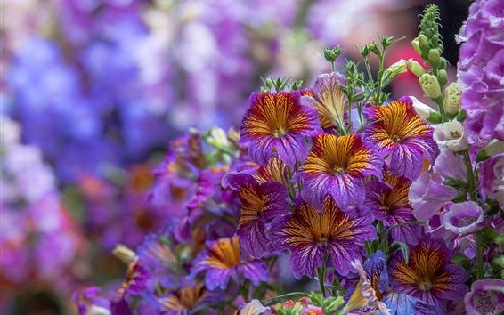 Wallpaper Purple digitalis flowers
