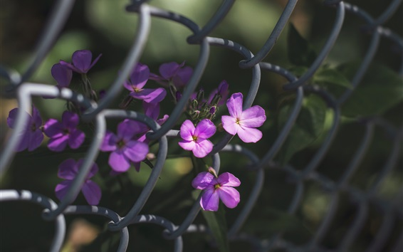 Wallpaper Purple flowers, fence