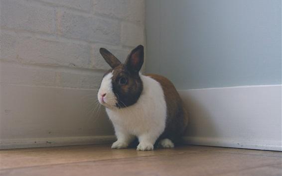 Hintergrundbilder Kaninchen stehend in der Ecke