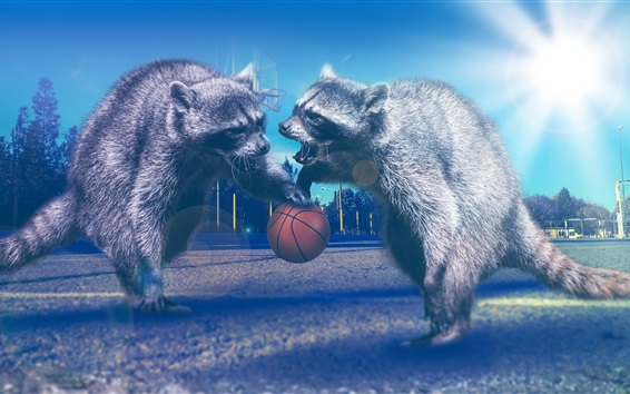 Wallpaper Raccoons play basketball, creative picture
