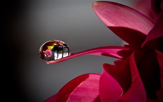 Papéis de Parede Pétalas de flores vermelhas, gota de água