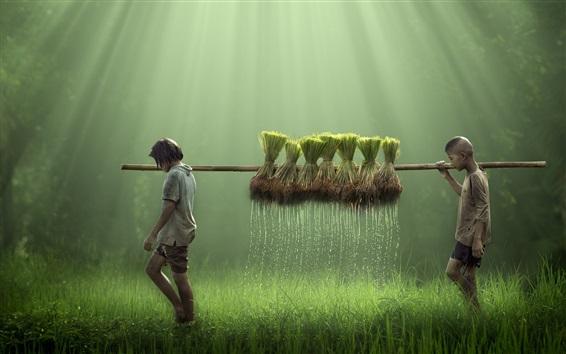 Обои Поле риса, дети, капли воды