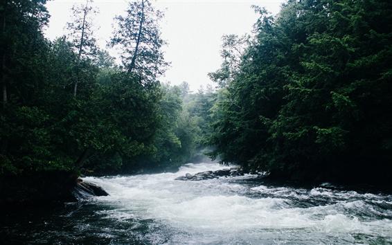 Wallpaper River, trees, fog, nature