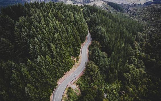 Обои Дорога, лес, деревья, автомобиль, вид сверху