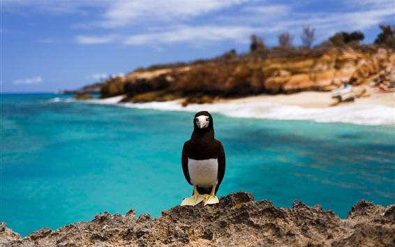 Papéis de Parede Pássaro do mar, rochas, mar