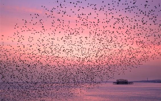 Wallpaper Sea, birds, sunset