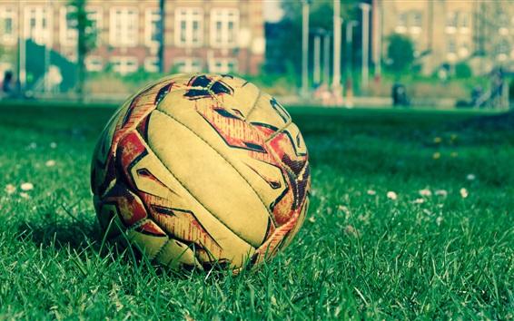 Обои Футбольный мяч, трава