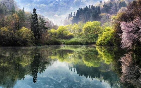 Обои Южная Корея, озеро, деревья, сакура, весна