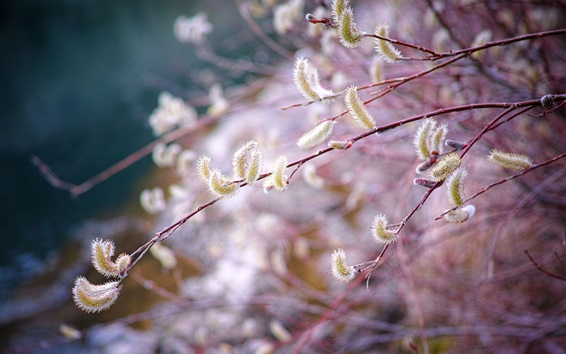 Wallpaper Spring, twigs, buds