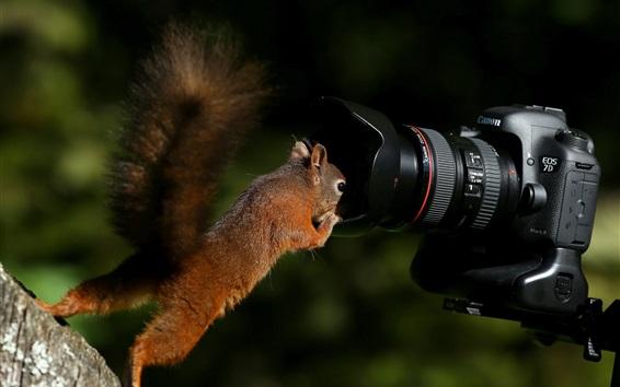 Papéis de Parede Câmera Squirrel e EOS 7D
