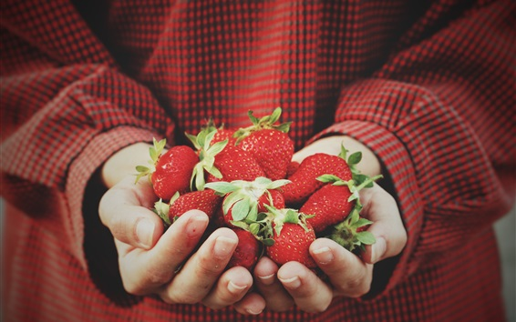 Wallpaper Strawberries in hands