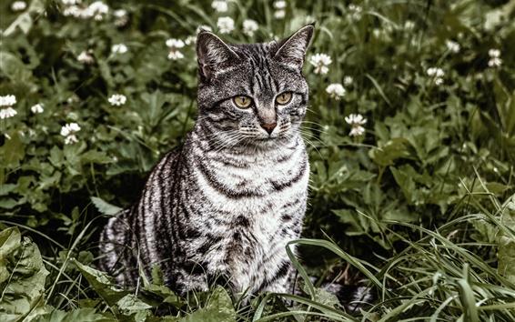 Wallpaper Striped cat, sit on grass