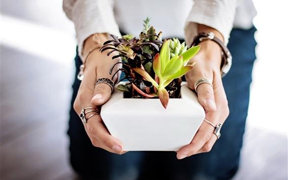 Обои Суккуленты в руках, комнатное растение