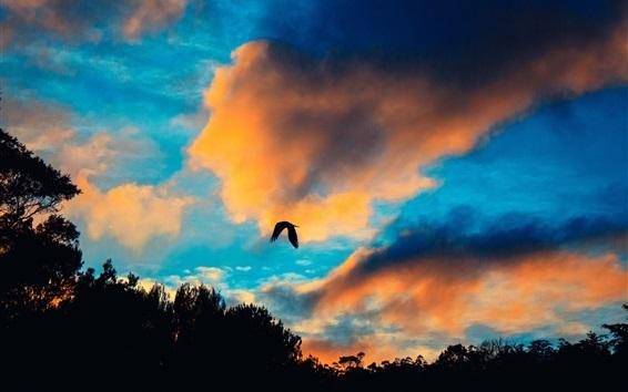Wallpaper Sunset, clouds, bird flight in sky
