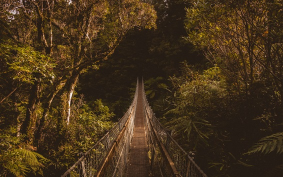 Wallpaper Suspended bridge, forest, trees