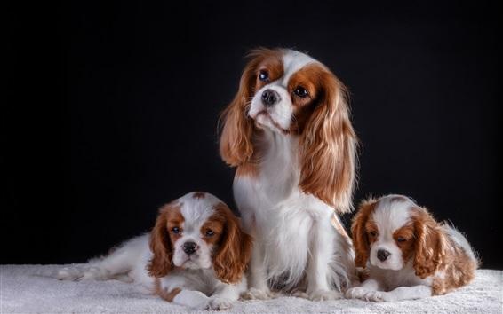 Fondos de pantalla Tres perros, mascotas lindas